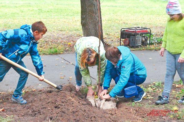 Жители могут выбрать, какие именно высаживать деревья, а также поучаствовать в работах.