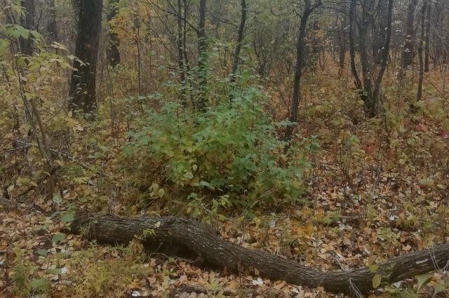 По версии следователей, мужчину убило спиленным деревом.