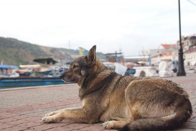 С начала года организации отловили и стерилизовали 294 бездомных животных.