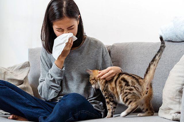 Страшнее кошки зверя нет. Какие питомцы опасны для аллергика
