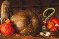 Тыкву очень ценят диетологи - она позволяет не только сбросить вес, но и улучшить здоровье