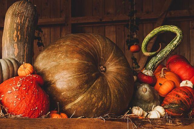 День оранжевой тыквы отметят в Зеленоградске