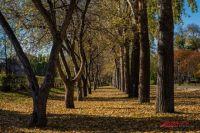 По информации начальника отдела озеленения ГУБО и ПО Светланы Гижицкой, в Новосибирске лесные массивы занимают 24% от всей территории города, а это больше 10 тысяч га.
