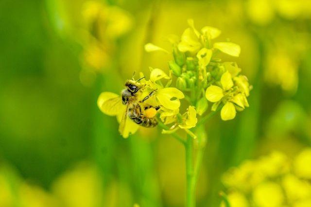 Тюменские депутаты обеспокоены массовой гибелью пчел в регионе