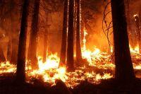 В Вагайском районе горит лес