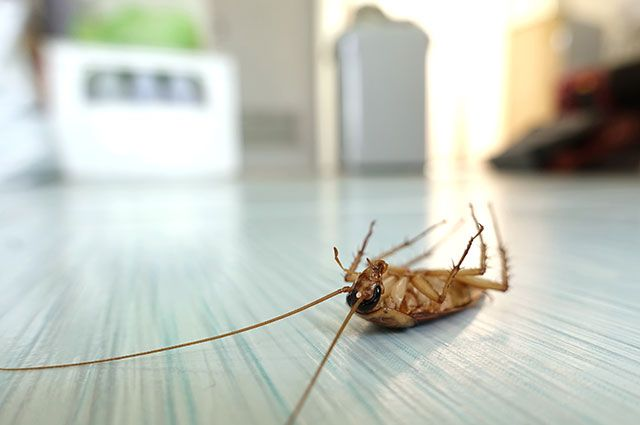 Как обезопасить квартиру от тараканов?