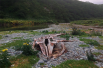 В мае шторм выкинул на берег мёртвого китёнка