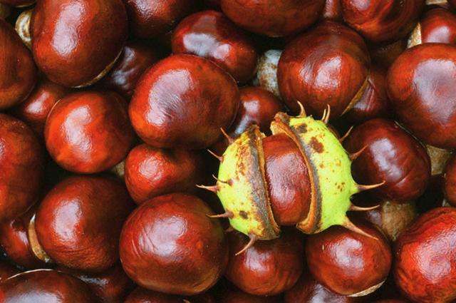 Каштановый и ореховый бизнес: названы расценки в пунктах приема
