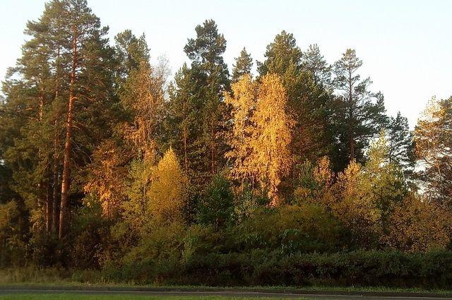 В Гидрометцентре рассказали о необычно теплой погоде в ноябре
