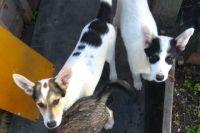 Нескольким щенкам нашли дом