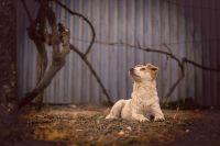 В Удмуртии спасли собаку, которую едва не зарубили топором живодёры