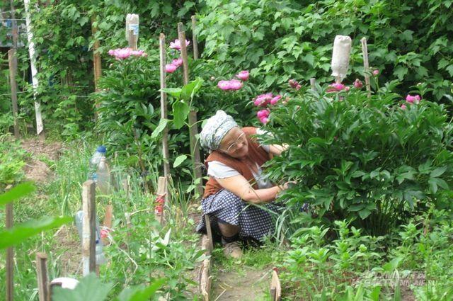 Пенсионеры боятся лишиться своих участков