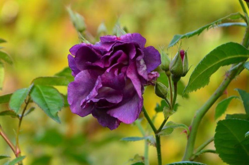 А уже в феврале начнут цвести первые цветы.