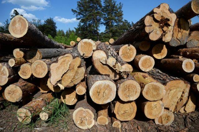 Прокуратура задержала лесников, которые вырубали леса на шесть млн гривен