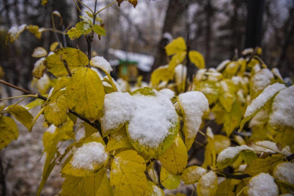 Еще не опавшие разноцветные листья кустов и деревьев красиво оттеняют белый снег, создавая очень живописную картину.