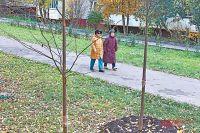 Жители дома  № 7, корп. 2  по ул. Генерала Тюленева голосовали  за липы.  Их и высадили во дворе.