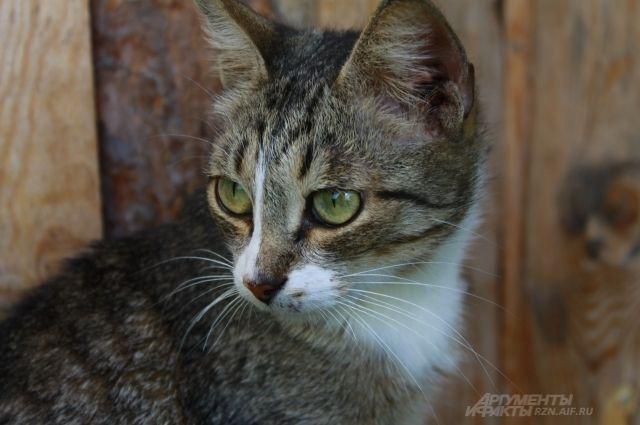 Оренбургский приют для кошек «Филимоша» оштрафовали на 90 000 рублей