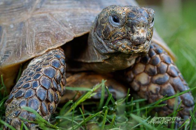 Около сотни контрабандных черепах, найденных в Оренбурге, погибли от холода.