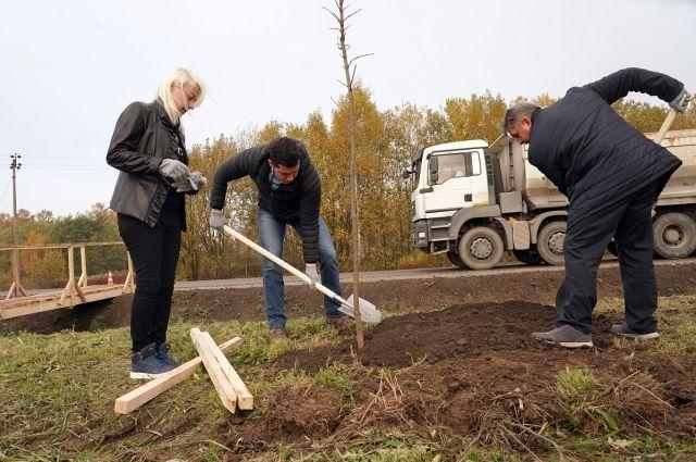 Началась высадка деревьев вдоль дороги «Калининград – Полесск»