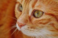 Оплату коту предлагают по количеству пойманных мышей.