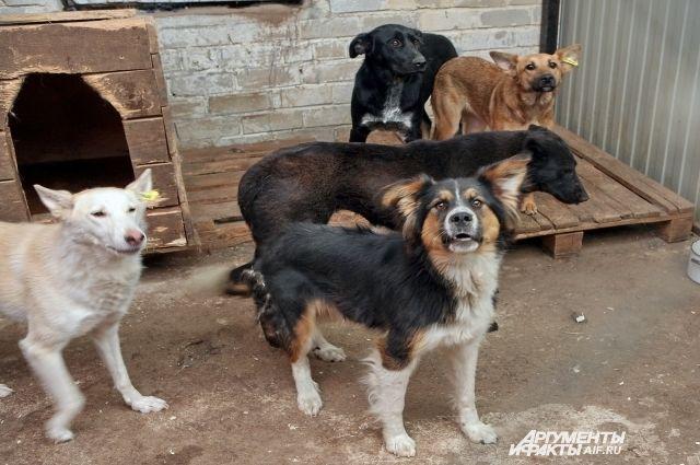 Бездомных животных распределят в приюты.