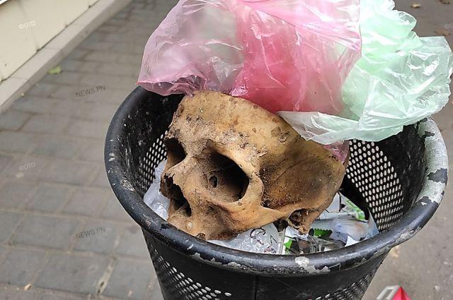 Жуткая находка: в Николаеве был найден человеческий череп