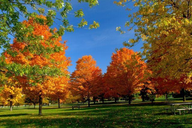 Погода на 22 октября: в Украине продолжается теплая и солнечная погода