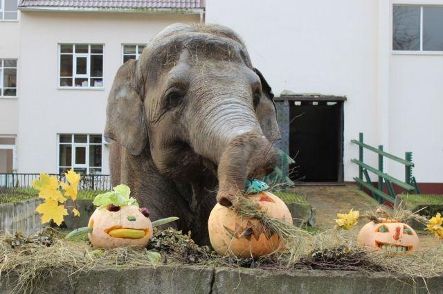Калининградский зоопарк меняет входные билеты на тыквы