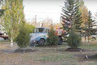 Посадка деревьев в Барнауле