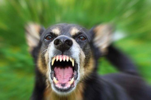В Запорожской области бешенная собака искусала своих хозяев