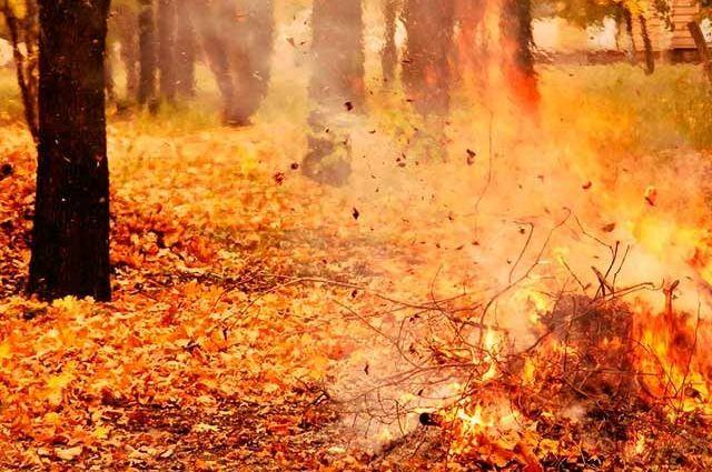 Сжигание листьев может вызвать рак, - Минэнергетики
