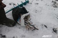 Ради улова рыбаки рискуют жизнью.