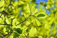 В Тюмени внимательно следят за содержанием зеленых насаждений