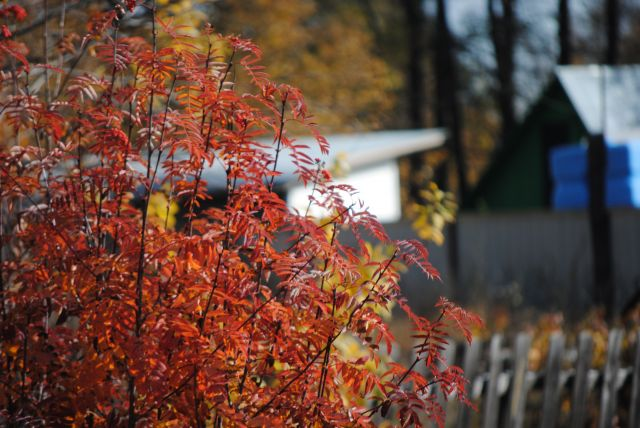 Теплая осень подошла к концу.