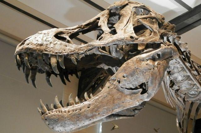 Сто миллионов лет назад такие животные жили в наших краях.