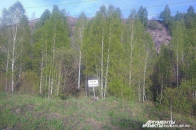 Отвал породы в Новокузнецком районе зарос сам, не дождавшись рекультивации.