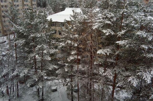 Снег пойдет в Новосибирской области 30 октября