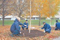 Дерево нужно сразу поставить ровно по вертикали, поэтому его укрепляют с помощью растяжек. Чтобы не повредить ствол верёвками, делают обмотку из крапивной мешковины.