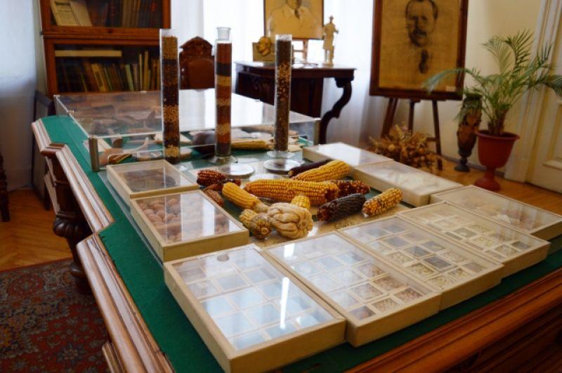 ВИР хранит уникальную коллекцию семян.