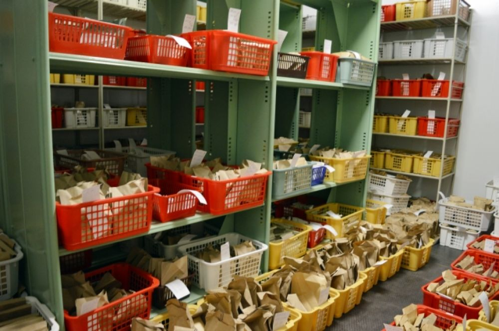 В ВИРе хранят больше 320 000 образцов семян.