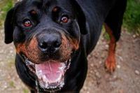 Под Тюменью на бригаду скорой помощи напала собака