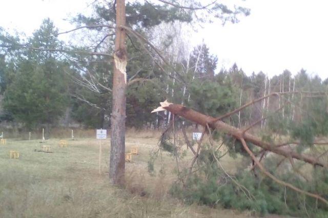 Очевидцы сообщили, что в парке имени Кирова уже проводят работы по уборке поваленных деревьев