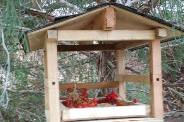 Тюменцев приглашают поучаствовать в конкурсе на лучшие кормушки для птиц