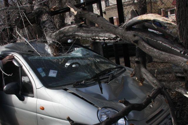 В Тюмени из-за сильного ветра и повалеВ Тюмени из-за сильного ветра и поваленных деревьев пострадали автомобилинных деревьев пострадали водители
