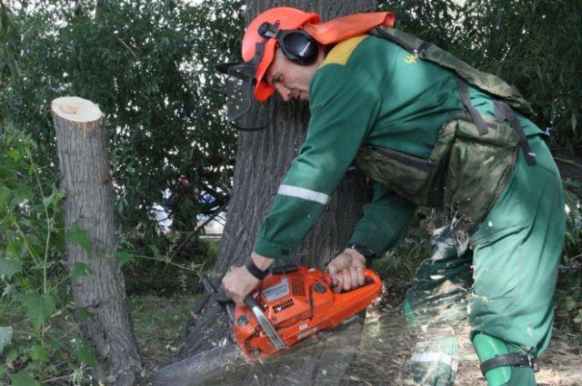 Челябинск катастрофически отстает от нормативных требований, но вырубка деревьев продолжается.