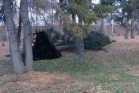 Дерево упало от ветра