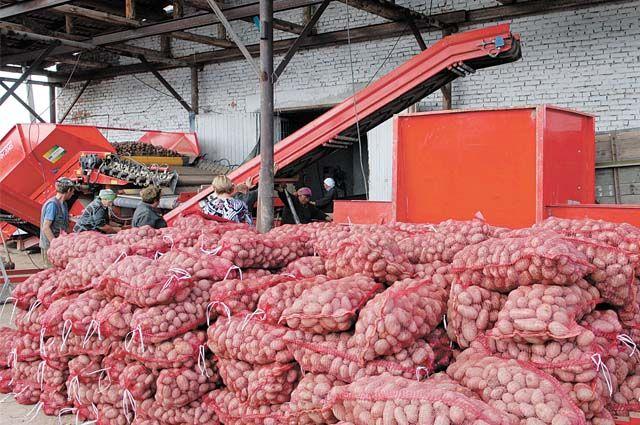 Несмотря на дождливое лето, на 18 октября собрали урожай с 607тыс. гектаров.