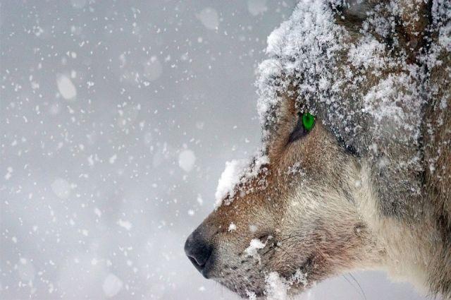 Собаку нашли по следам крови в лесу. Она была мертва.