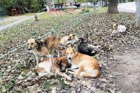 В приютах сотни брошенных животных ждут хозяев.