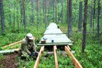 Тропа «Удивительное рядом» в Костомукшском заповеднике.
